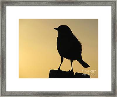 On A Post Framed Print by Joseph Williams