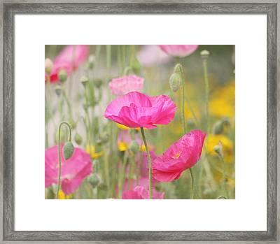On A Summer Day - Pink Poppy Framed Print by Kim Hojnacki