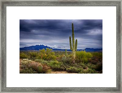 On A Winter's Day In The Sonoran Desert  Framed Print