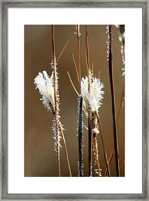 On A Winter's Morning Framed Print by Carolyn Fletcher