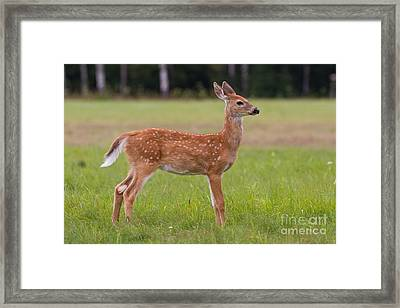 On Alert Framed Print by Kevin McCarthy