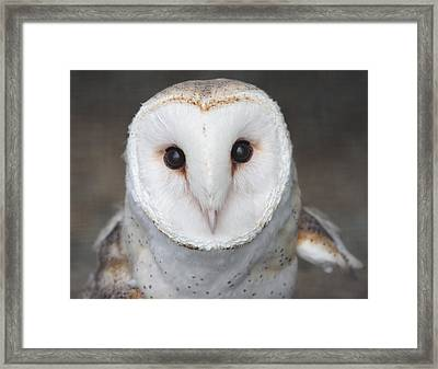 On Alert Framed Print by Nathan Rupert