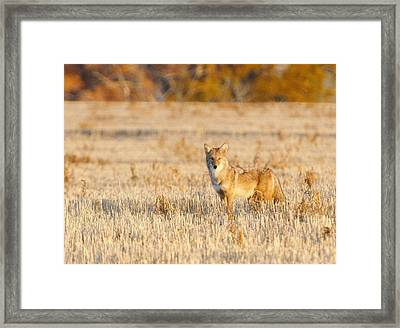 On Alert Framed Print by Shirley Heier