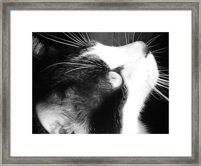On Bird Watch Duty Framed Print by Donna Coupe