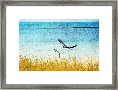 On Coastal Breezes Framed Print by Jan Amiss Photography