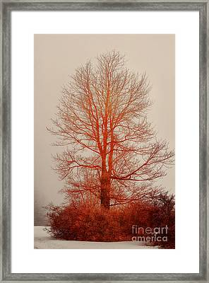 On Fire In The Fog Framed Print by Lois Bryan