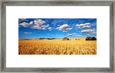 On Golden Fields Framed Print by Bill  Robinson