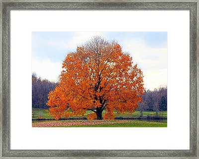 On Golden Pond Framed Print by Karen Wiles
