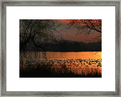 On Golden Pond Framed Print by Lori Deiter