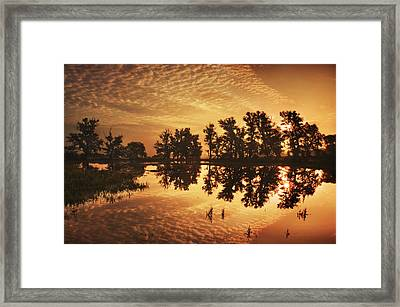 On Golden Ponds Framed Print by Adrian Campfield