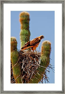 On Guard Framed Print by Robert Bales
