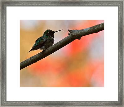 On Guard Framed Print