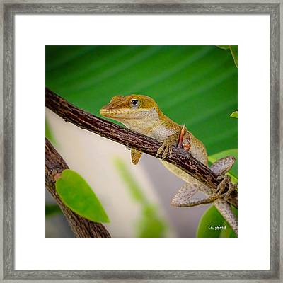 On Guard Squared Framed Print by TK Goforth