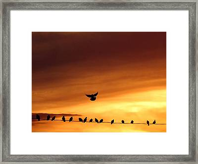 On Line The Social Network Framed Print by Darcy Grizzle