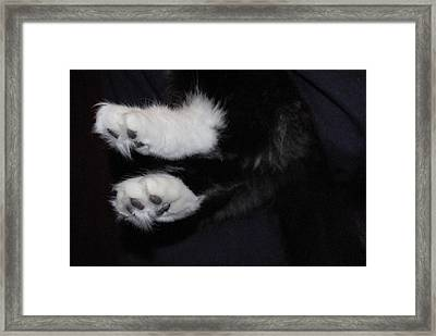 On Little Cat Feet Framed Print by Marilyn Wilson