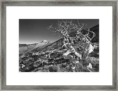 On Niva Hill Framed Print by Peter Eastland