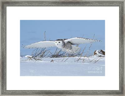 On Patrol Framed Print by Heather King