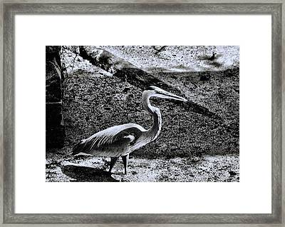 Framed Print featuring the photograph On Patrol by Robert McCubbin