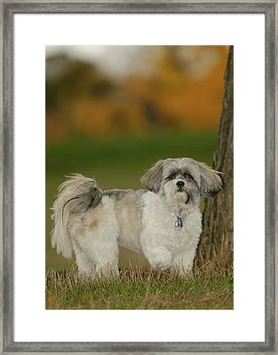 On Point Framed Print by Arthur Fix