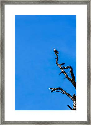 On Point Framed Print by Marvin Spates