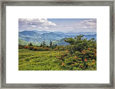 On Roan Mountain 10 Framed Print