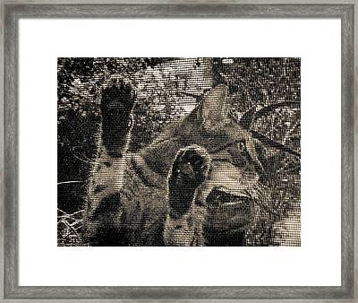 On Second Thought Framed Print by Christy Usilton