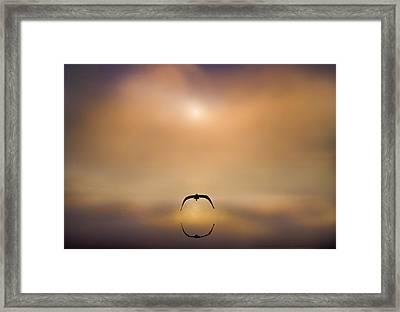 On Silent Wings Framed Print