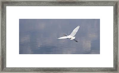 On Swift Wings Framed Print