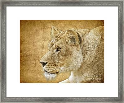 On Target Framed Print by Steve McKinzie