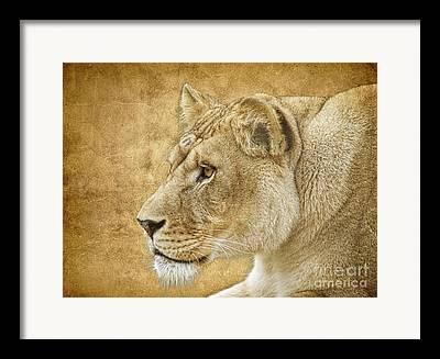Tigress Framed Prints