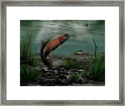 On The Attack - Rainbow Trout After A Fly Framed Print