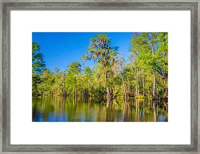 On The Bayou 2 - Paint Framed Print by Steve Harrington