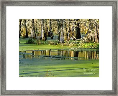 On The Bayou Framed Print