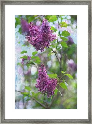 On The Bush Framed Print by Rebecca Cozart