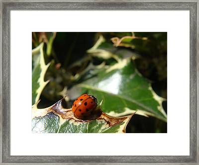 On The Edge Framed Print by Cheryl Hoyle
