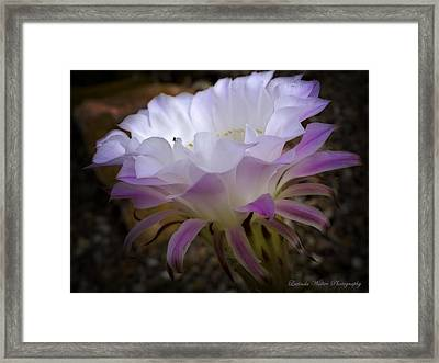 Framed Print featuring the photograph On The Edge by Lucinda Walter