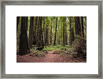 On The Enchanted Path Framed Print by Michelle Calkins