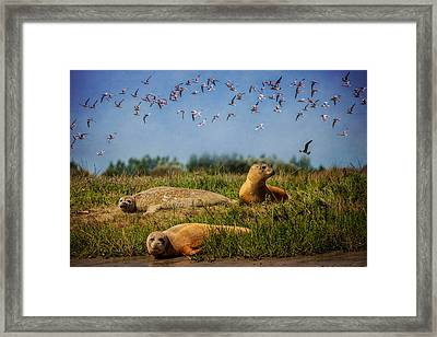 On The Estuary Framed Print by Chris Lord