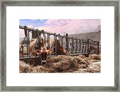 On The Farm Framed Print by K Hines