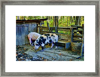 Framed Print featuring the photograph On The Farm by Kenny Francis