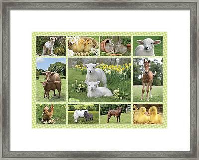 On The Farm Multipic Framed Print by Greg Cuddiford