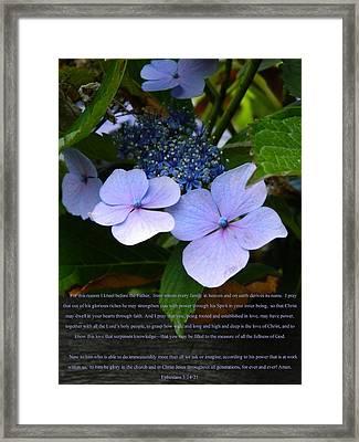 On The Fence Hydrangea Eph 3 14 21 Framed Print by Nicki Bennett