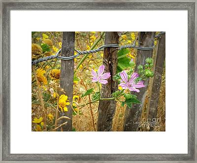 On The Fence Framed Print by Lainie Wrightson