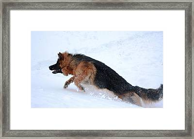 On The Fly Framed Print