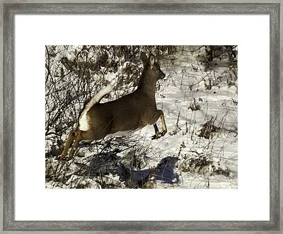 On The Fly  Framed Print by Thomas Young