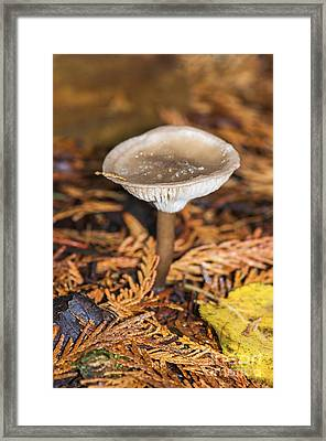 On The Forest Floor 2 Framed Print by Sharon Talson