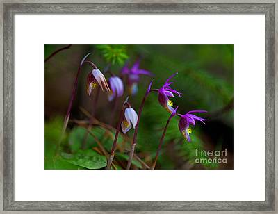 On The Forest Floor Framed Print