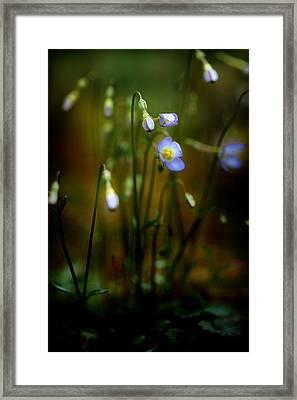 On The Forest Floor Framed Print