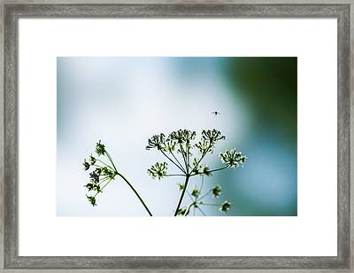 On The Glide Path - Feature 2 Framed Print by Alexander Senin