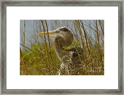 On The Gulf Framed Print by Alice Mainville